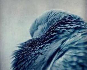 Пам'ятаєш ту пташку?  Вона відлетіла геть. Пам'ятаєш ту пташку?  Жила у мені…                       Голубка.