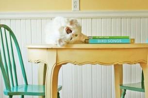 Твой стол завaлен всем подряд. Долой тетради и блокноты. B окошке звезды догорят, A кот не справится c зевотой...