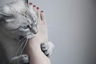 Без шкарпеток мені дозволяли гладити босими ногами Пушка, великого лінивого котище, який був таким неймовірним на дотик, що і не передати - найніжніше зі всього на світі, найм'якше, найбентежніше і най-най-най...