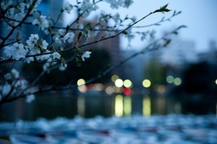 ...розцвітають у темряві самотніми китайськими ліхтариками, розвішаними знічев'я на похиленій сакурі київського світанку.
