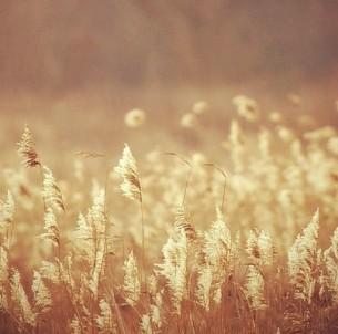 Leg deinen Schatten auf die Sonnenuhren, und auf den Fluren lass die Winde los.  Befiehl den letzten Früchten, voll zu sein...