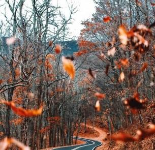 Sie redet, wie ein Blatt vom Baum zur Erde schaukelt. Lacht, als suchten Stürme unter allen Blättern das, worauf ein Gott sich den Sinn des Suchens überhaupt notiert und weggeworfen hat...