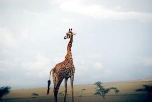 """Пабло Пикассо сказал однажды:""""Бог- прежде всего художник. Он придумал жирафу, слона, муравья. И, надо сказать, Он никогда не старался следовать одному стилю..."""