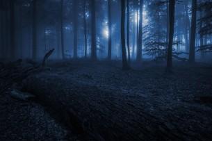 Мировое началось во мгле кочевье:  Это бродят по ночной земле - деревья...