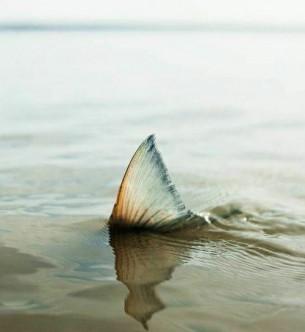 Это был и роман не роман, ночь не ночь… Только теплая рыба нежно коснулась меня...