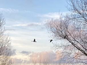 Гуси – это красиво.  Гуси – это лебеди.  Гуси не любят лесть.  Они разбиваются вдребезги...